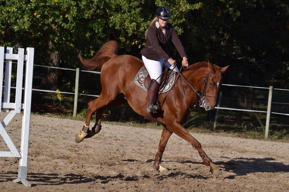 Laure a cheval pour le cavalier ce sportif