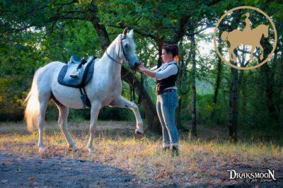 Éducation / Dressage du cheval