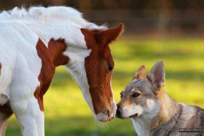 Formation à la Communication Animale