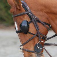Protection oculaire équines anti-UV de la marque FoxProLineP