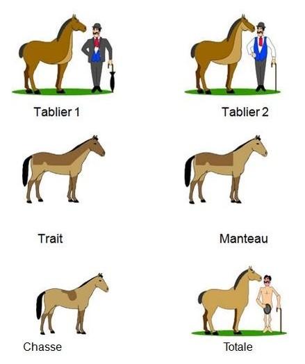 tonte cheval