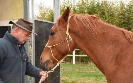 equilogos-relation-homme-cheval