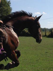 assurance-cheval