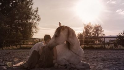 Fizzy.horse