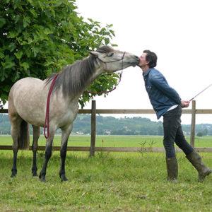Travail raisonné du cheval au sol : Renaud SUBRA / Alter Horse