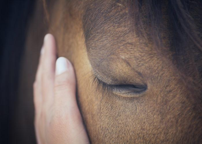 Notre relation avec le cheval