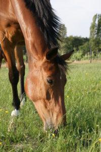 headshaking-cheval