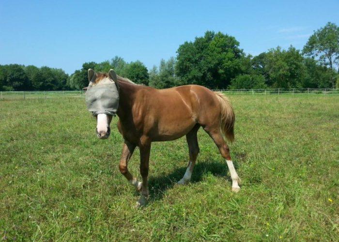 photosensibilisation-cheval