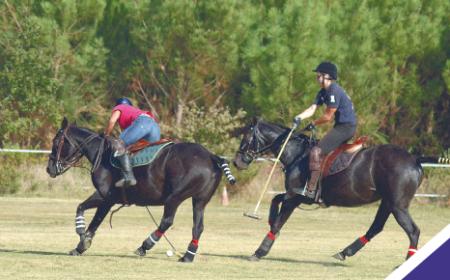 polo-cheval
