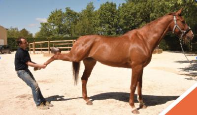 ostéopathie-cheval