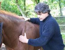 DREUILLE Jean-Luc ostéopathe équin