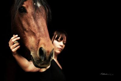 les-ulceres-gastriques-du-cheval