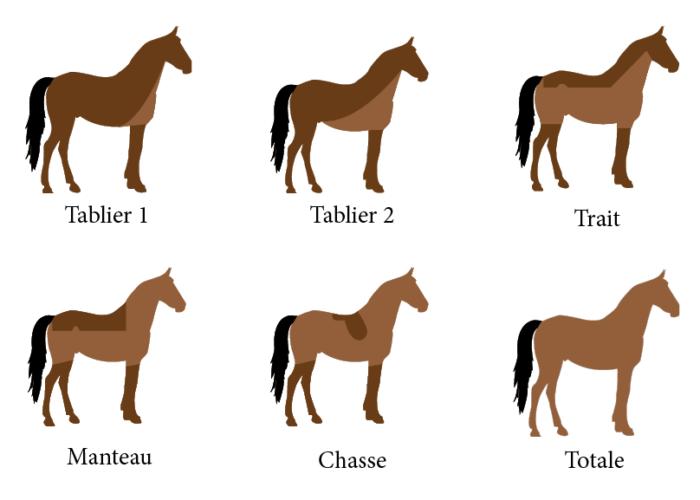 Tondre son cheval | Cheval Partenaire