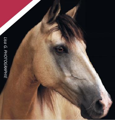 prêter-son-cheval