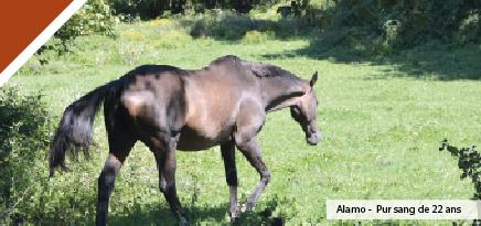 les-besoins-alimentaires-du-cheval