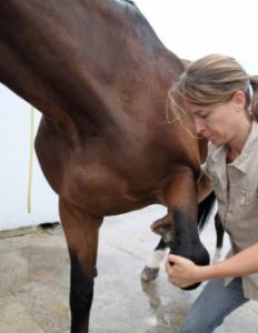 massotherapie-equine