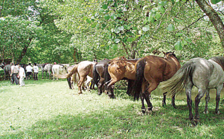 rally-equestre