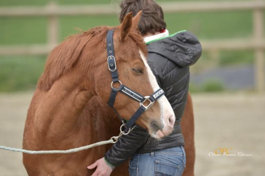 bien-etre-cheval