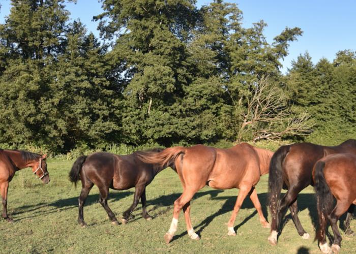 equitation-et-protection-sanitaire