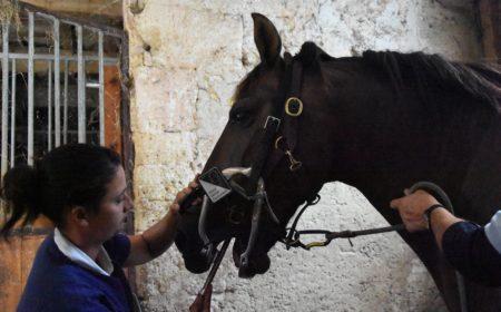 technicien-dentaire-equin
