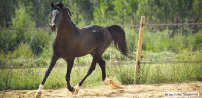 colique-de-sable-cheval