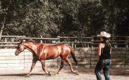 equitation-western-et-ethologie
