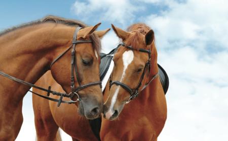 equestrassur-assurance-cheval