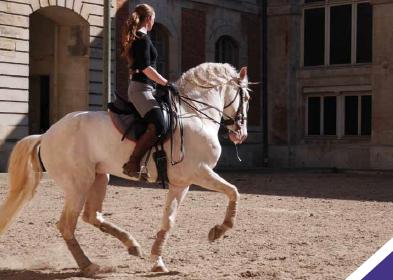 dressage-cheval