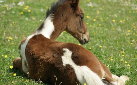 analyse-sanguine-cheval