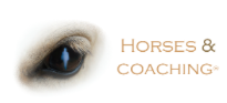 3GB HORSE & COACHING