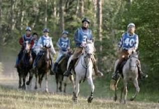 endurance-equestre