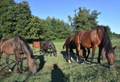 vermifuger-son-cheval