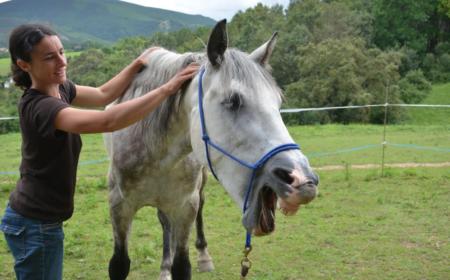 la-massothérapie-equine