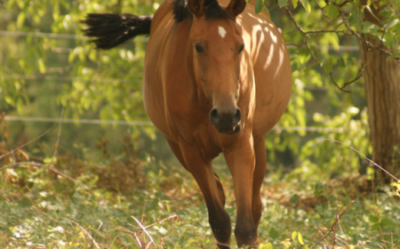 automne-cheval