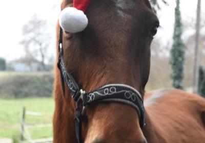 hiver-cheval
