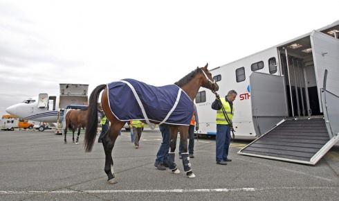 sth-hipavia-transport-cheval
