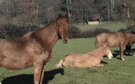 vieux-cheval-hiver