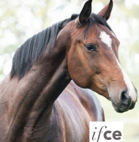 stress-cheval