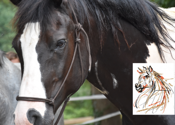 cavaal-soins-chevaux