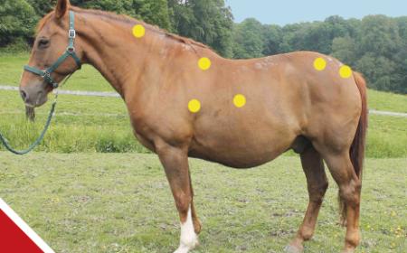 faire maigrir son cheval