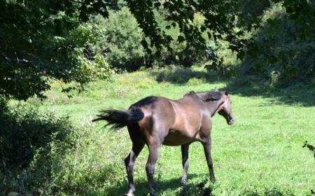 Le printemps pour le cheval