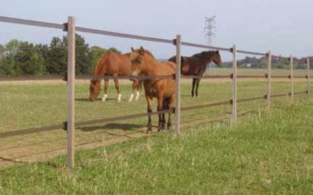 la-sangliere-cloture-cheval