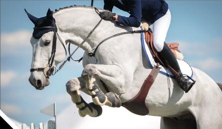 gérer le stress chez le cheval