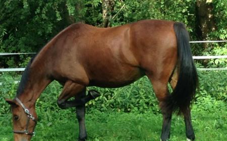 coprologie du crottin du cheval