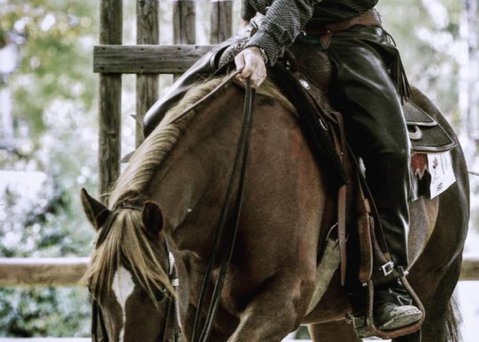le cheval et l'équitation western