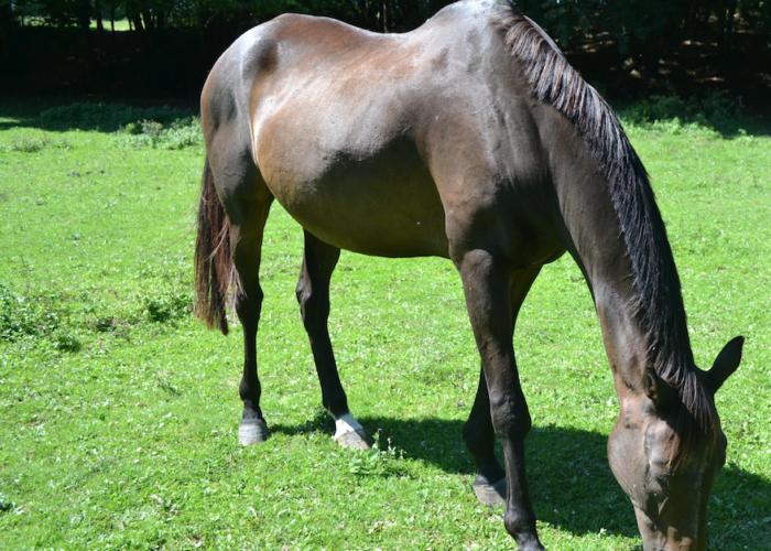 adapter l'alimentation du vieux cheval