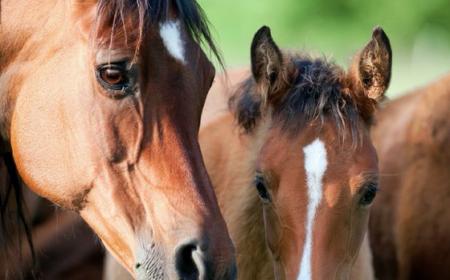 Les vitamines chez le cheval