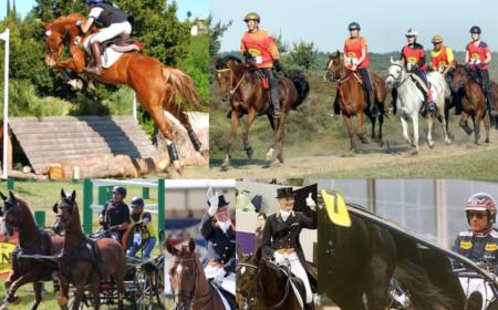 l'alimentation du cheval d'endurance
