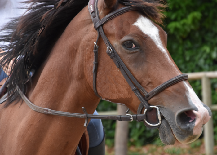 stress du cheval et alimentation