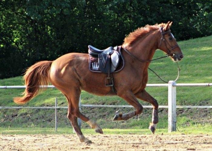 comment reprendre confiance à cheval